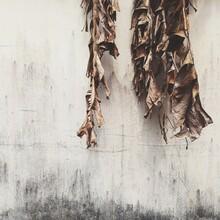 Dried Life