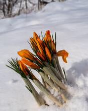 Close-up Of Orange Flower Plant During Winter