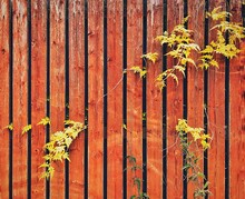 Full Frame Shot Of Fence By Plants