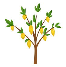 Lemon Tree With Yellow, Green Lemons, Flowers And Leaves. Element For Design.  Illustration. Isolated On White Background