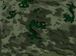 Platan zielony 2