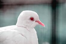 White Bird And Red Eye