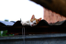 View Of A Cat Resting On Roof