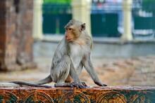 Monkey Sitting Against Building