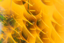Full Frame Shot Of Abstract  Leaf Pattern