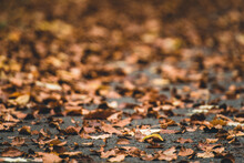 Close-up Of Dried Leaves On Field During Autumn