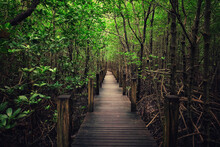 View Of Wooden Footbridge In Forest
