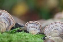 Close-up Of Fungus