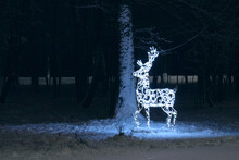 View Of Light Deer On Snow Covered Land