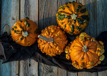 Overhead View Of Bumpy Warty Pumpkins Called Knuckle Heads On Rustic Wood