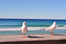 Curious Seagulls On Beach Against Sky