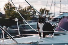 Black And White Cat On A Sailboat