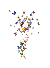 A Large Set Of Flower-shaped Butterflies Is Isolated Against A White Background. Tropical Moths.