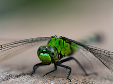 Close Up Of Beautiful Green Dragonfly