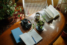 High Angle View Of Potted Plant On Table