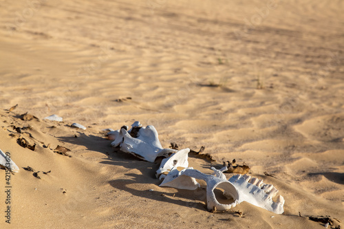Canvas Dry desert with animal bones