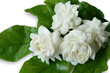 canvas print picture - White flower Jasmine isolated on white background. This has clipping path.