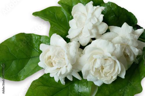 Fotografie, Tablou White flower Jasmine isolated on white background