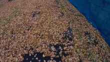 Leaves And Asphalt