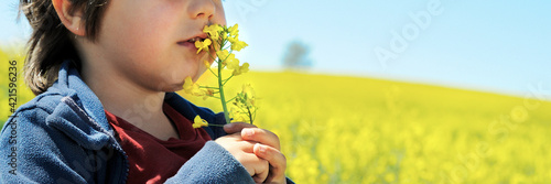 Fototapeta Little boy smells rapeseed flower obraz