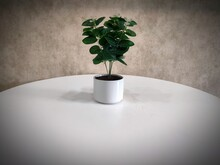 A Flower Pot  On The White Table For Decoration.