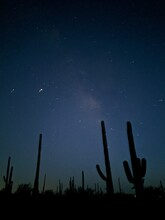 Low Angle View Of Silhouette Cactus Against Sky At Night