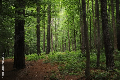 Fotografia View Of Trees In Forest