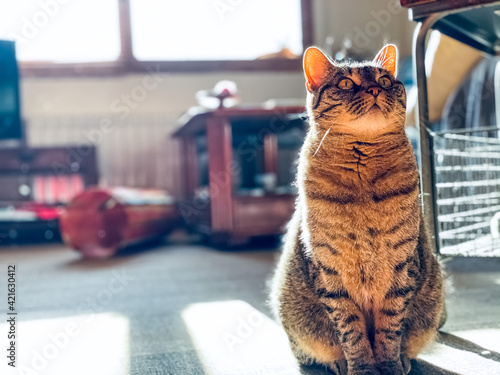Tablou Canvas Cat At Home Looking Attentive