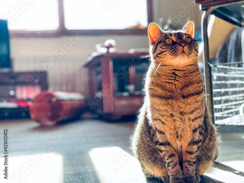 Fényképezés Cat At Home Looking Attentive
