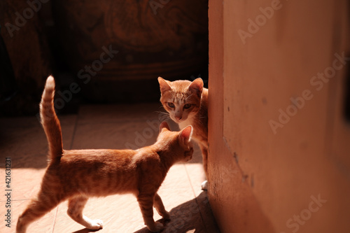 Tablou Canvas Portrait Of A Cat