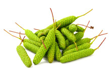 A Pile Of Birch (Betula Pendula) Catkins. Also Known As Silver Birch, Warty Birch, European White Or East Asian White Birch. Isolated On White.