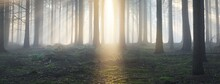 Panoramic View Of The Majestic Evergreen Forest In A Morning Fog. Mighty Pine Tree Silhouettes. Atmospheric Dreamlike Summer Landscape. Sun Rays, Mysterious Blue Light. Nature, Fantasy, Fairytale