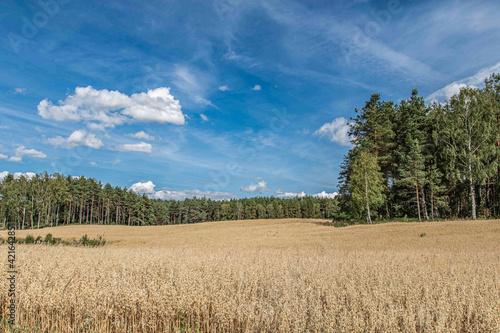 Obraz Piękny letni krajobraz - fototapety do salonu