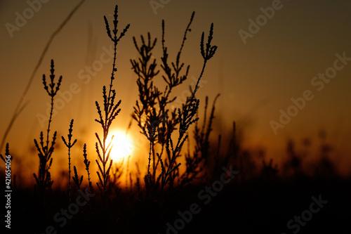 Fototapeta Sonnenuntergang Abendrot Lüneburger Heide