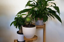Different Plants On Wooden 3 Tier Standing Planter On White Wall Wall Background