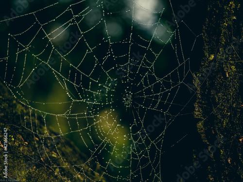 Close-up Of Spider On Web Fotobehang