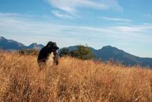 Dog On Hike Near Idyllwild,ca