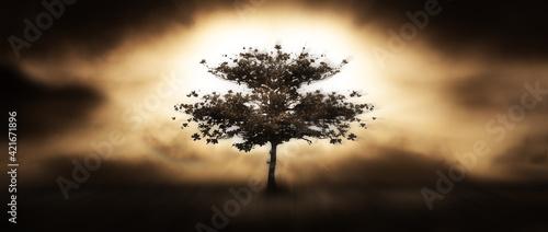 Fotografie, Tablou divine tree