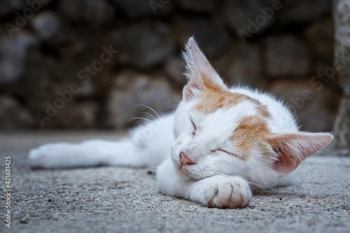 Close-up Of A Cat Sleeping Fototapeta