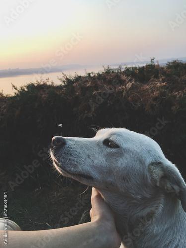 Slika na platnu Animal And Nature