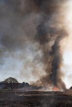 燃え上がる炎 葦の群生地の野焼き