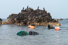 Seagulls Perching On Rock Female Divers In Sea Against Clear Sky