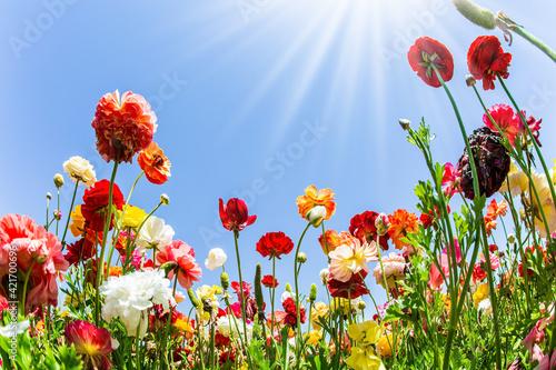 Fotografie, Obraz Wonderful trip for spring beauty