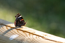 Closeup Shot Of A Red Admiral Butterfly On A Wooden Surface