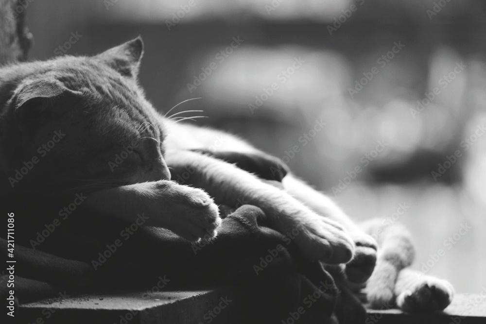 Fototapeta Close-up Of Horse Sleeping On Man