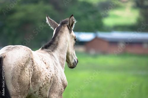 Foal Grazing Fotobehang