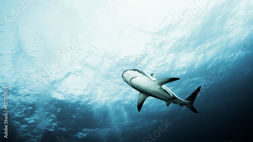 Fotografie, Obraz Low Angle View Of Shark Swimming In Sea