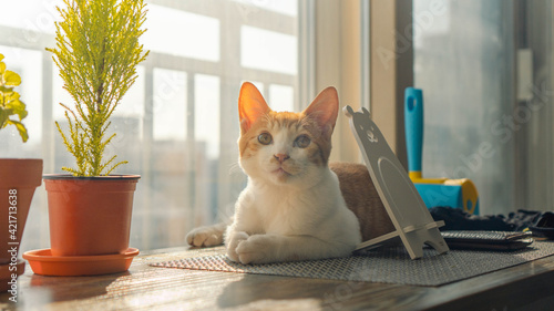 Tablou Canvas Cat Sitting On Table At Home