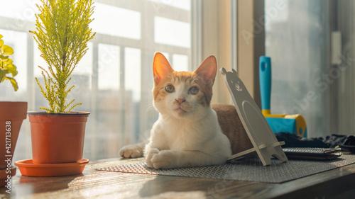 Fényképezés Cat Sitting On Table At Home