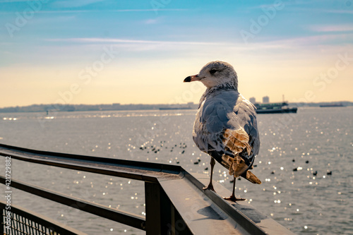 Canvastavla Seagull Perching On Railing Against Sea